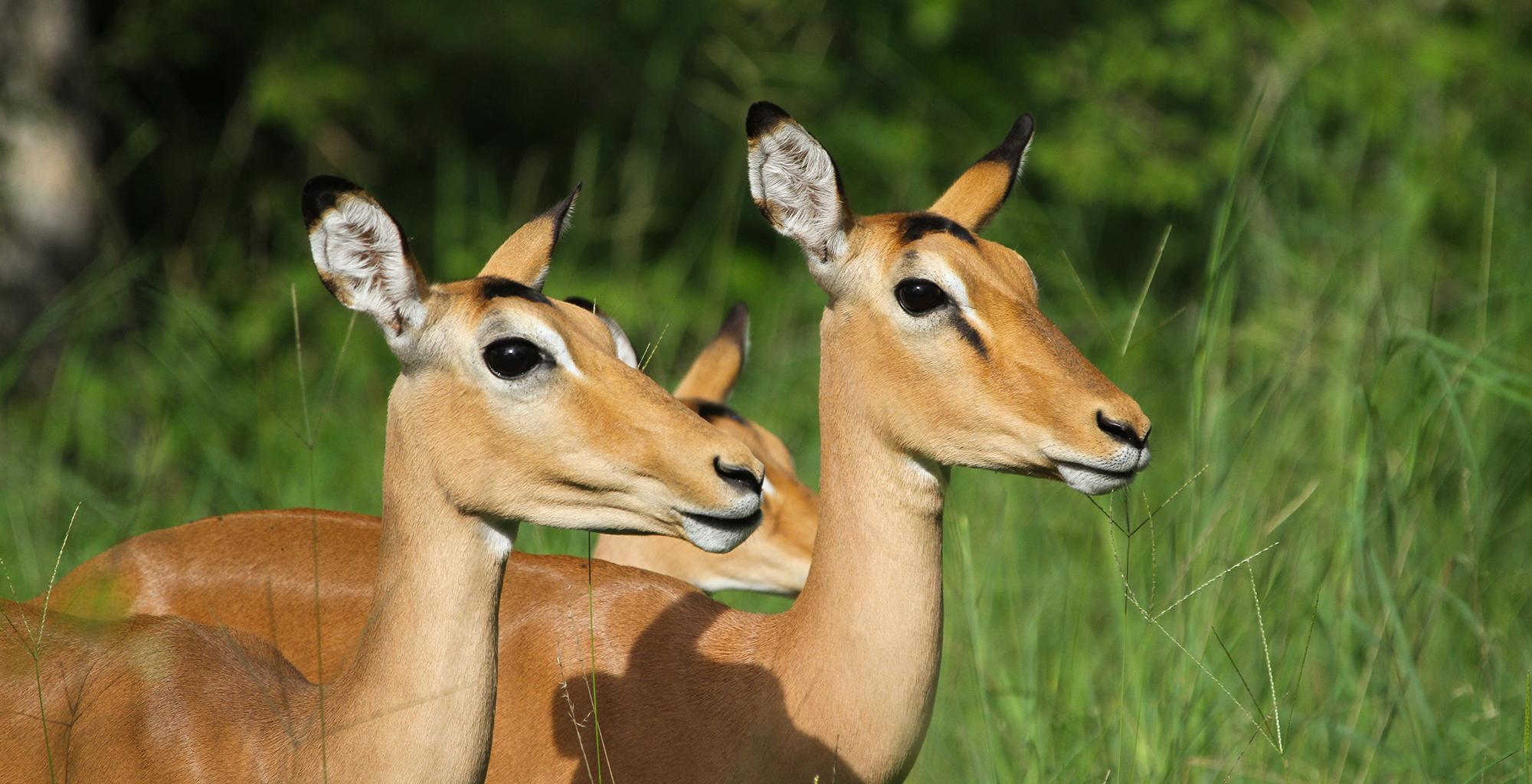Malawi-Wildlife