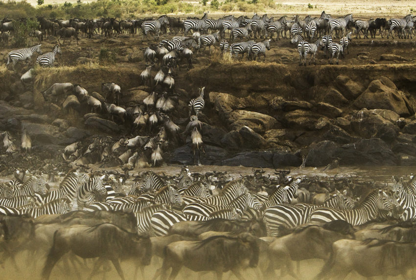 Kenya-Mara-Expedetions-Wildlife