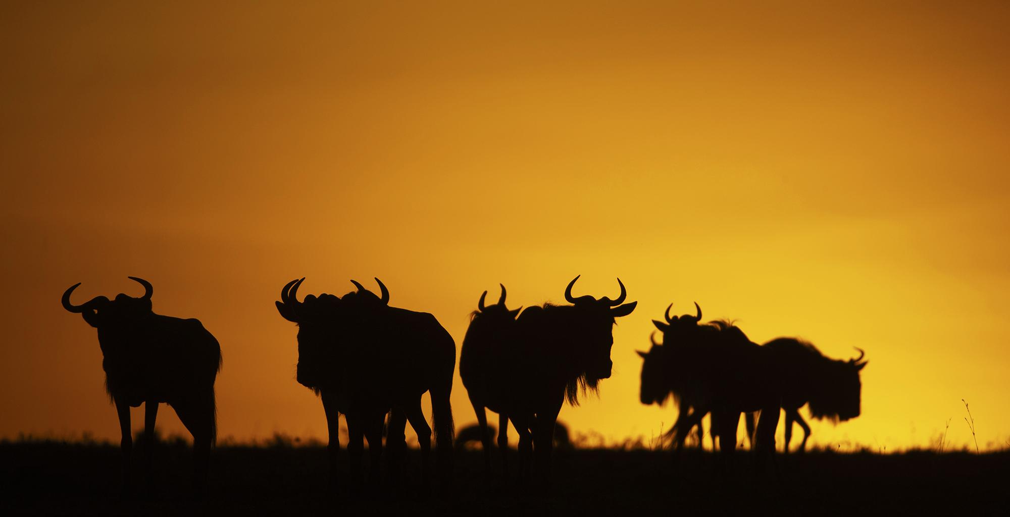 Kenya-Wildlife-Silhouette