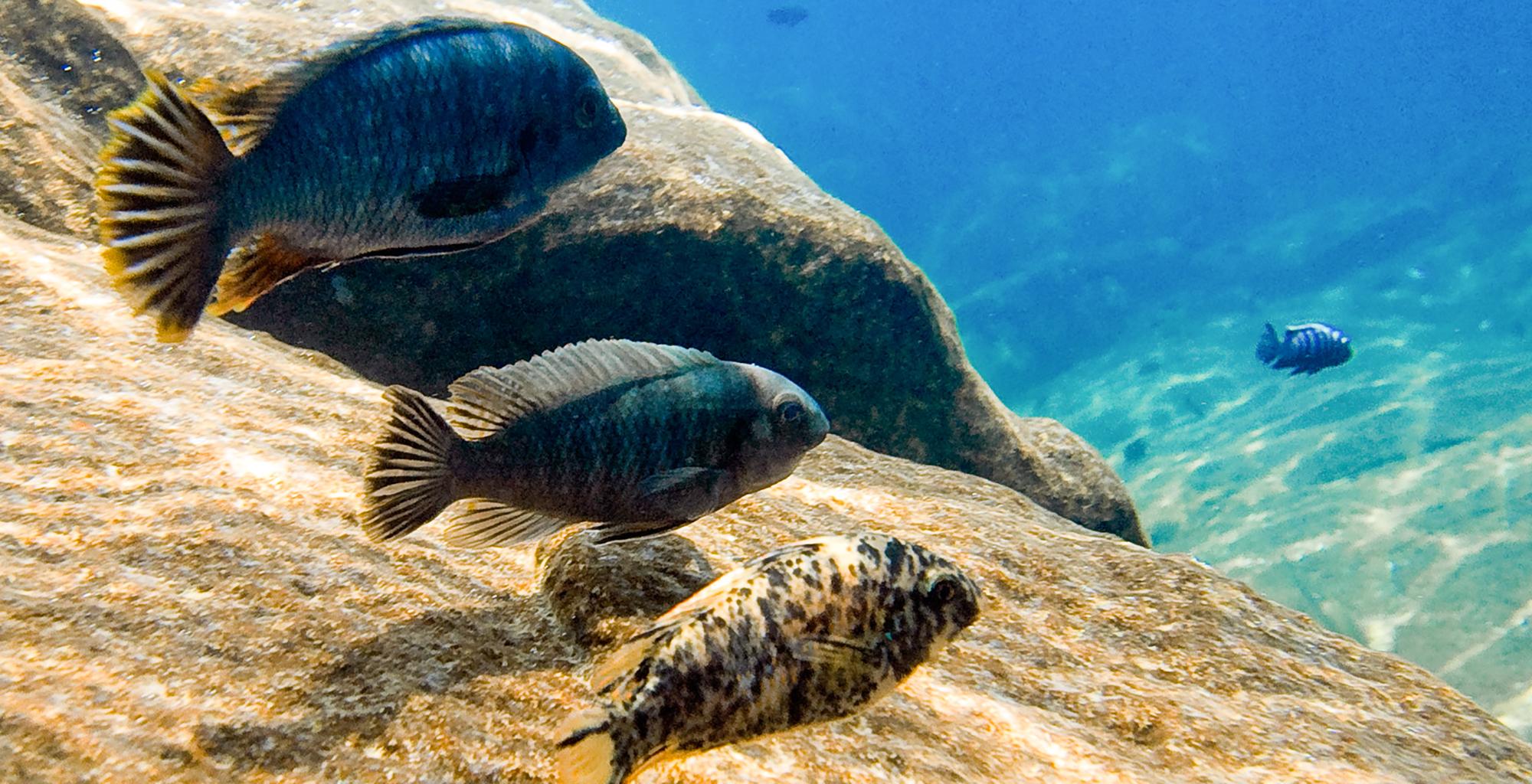 Malawi-Pumulani-Sealife