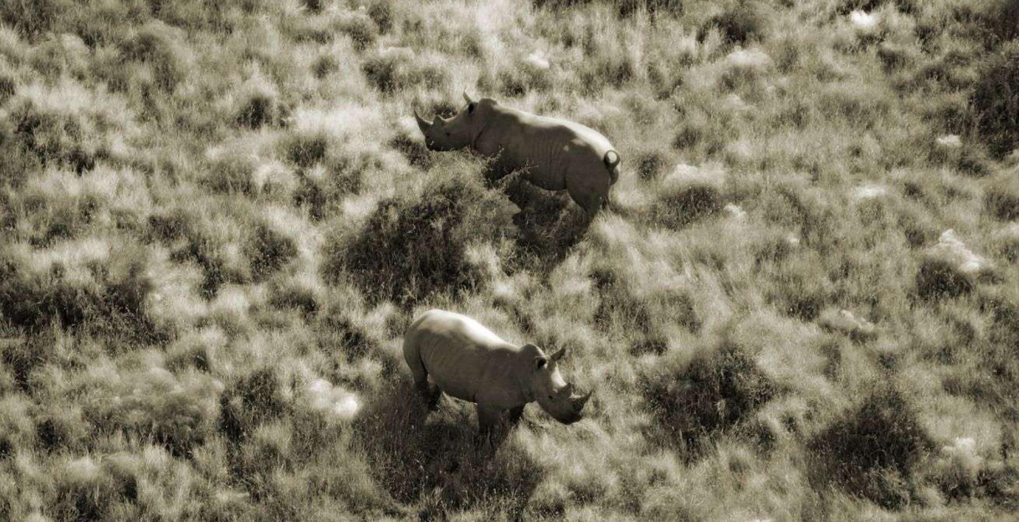 Kenya-Enasoit-Rhino-Aerial