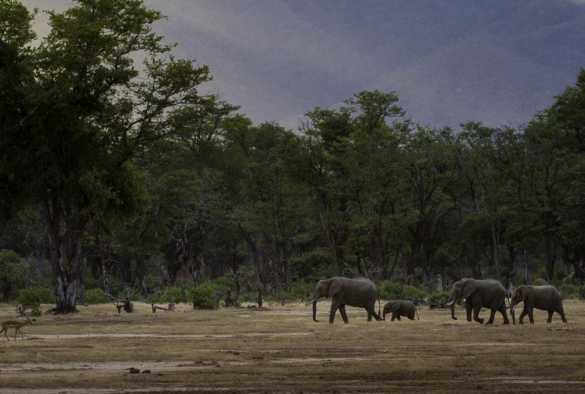 Zimbabwe-Wildlife-Elephant-Impala