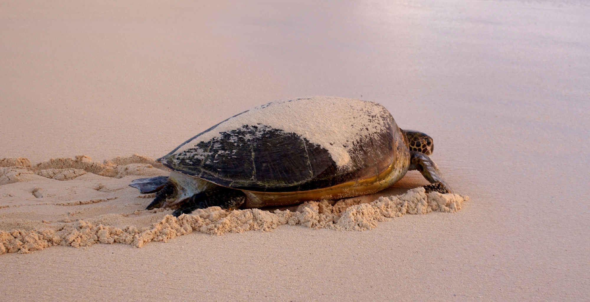 Mozambique-Wildlife-Turtle
