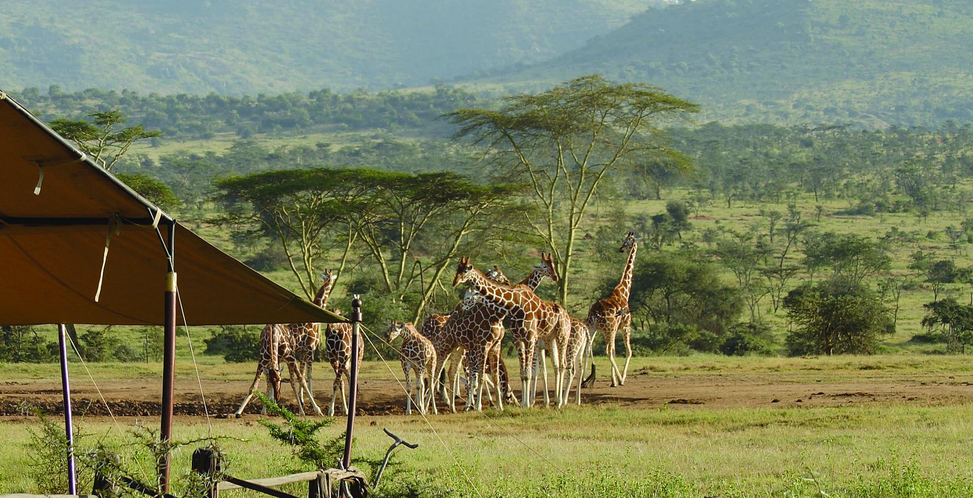 Kenya-Enasoit-Giraffe