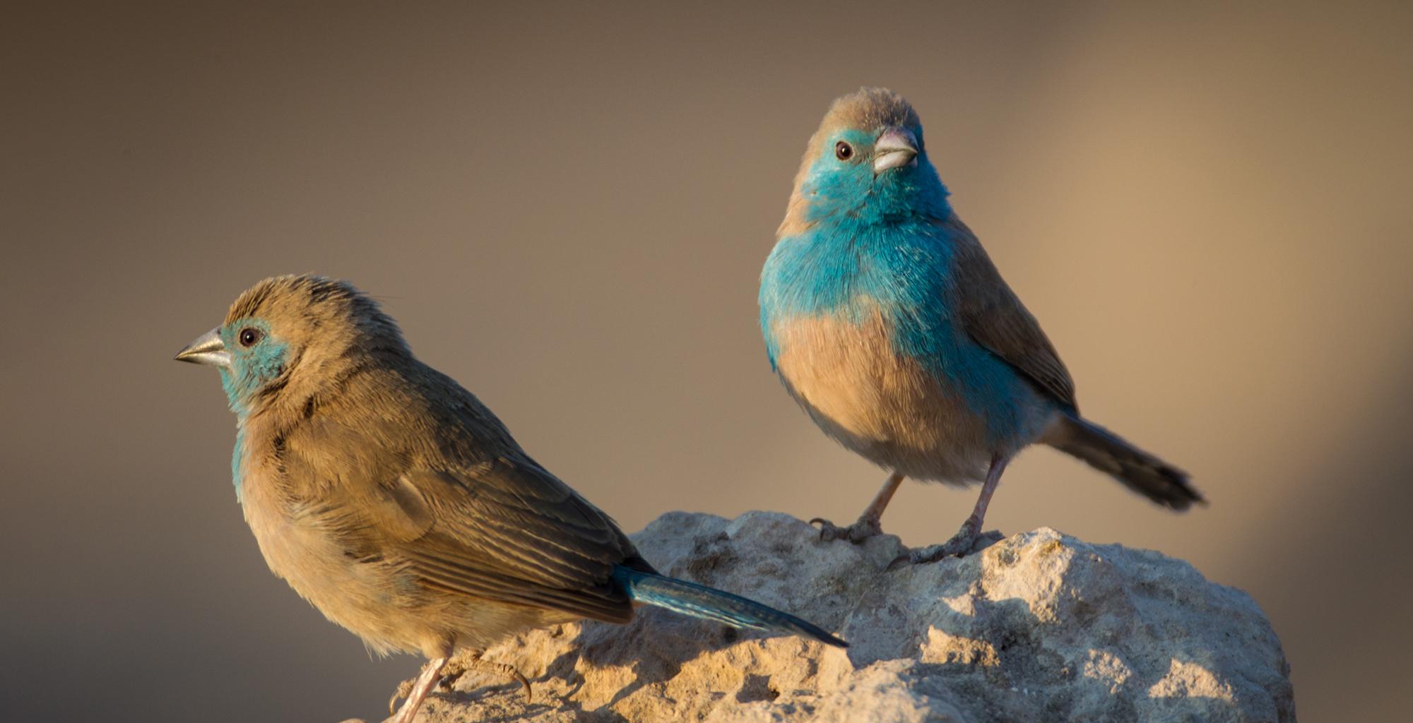 Namibia-Birdlife