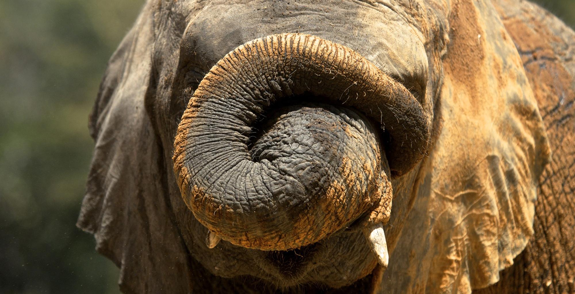 Kenya-Campi-ya-Kanzi-Elephant