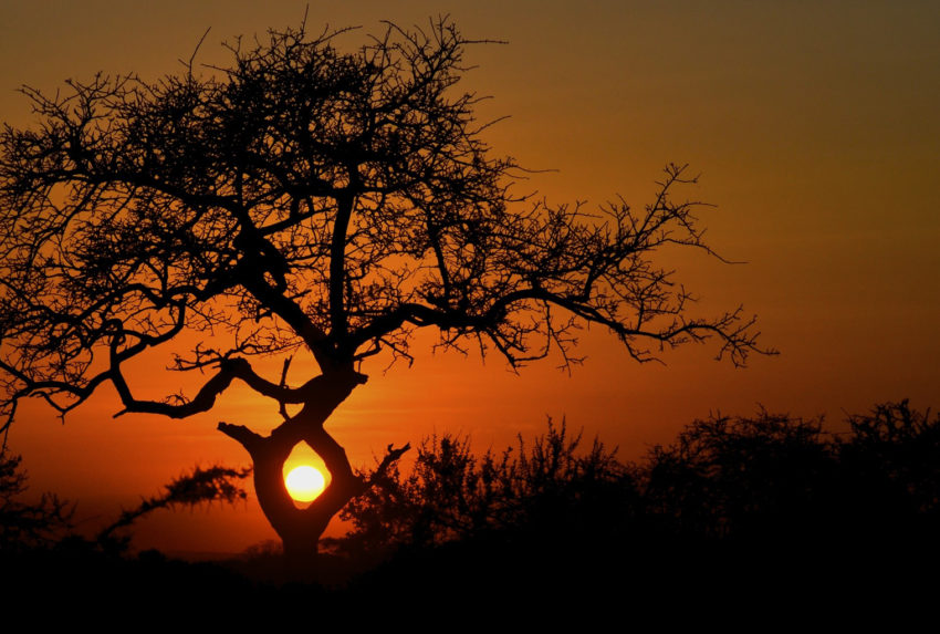 Kenya-Amboseli-National-Park-Sunset