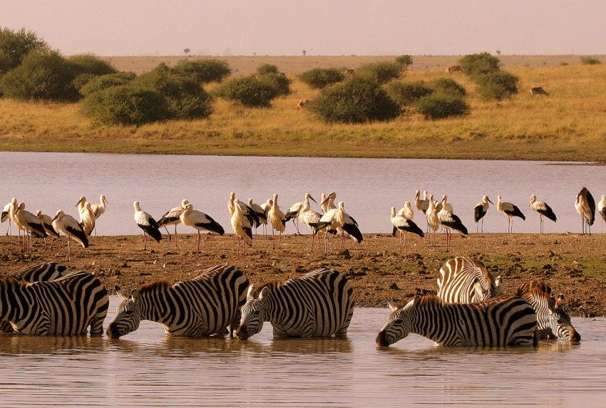 Kenya-Nairobi-Wildlife