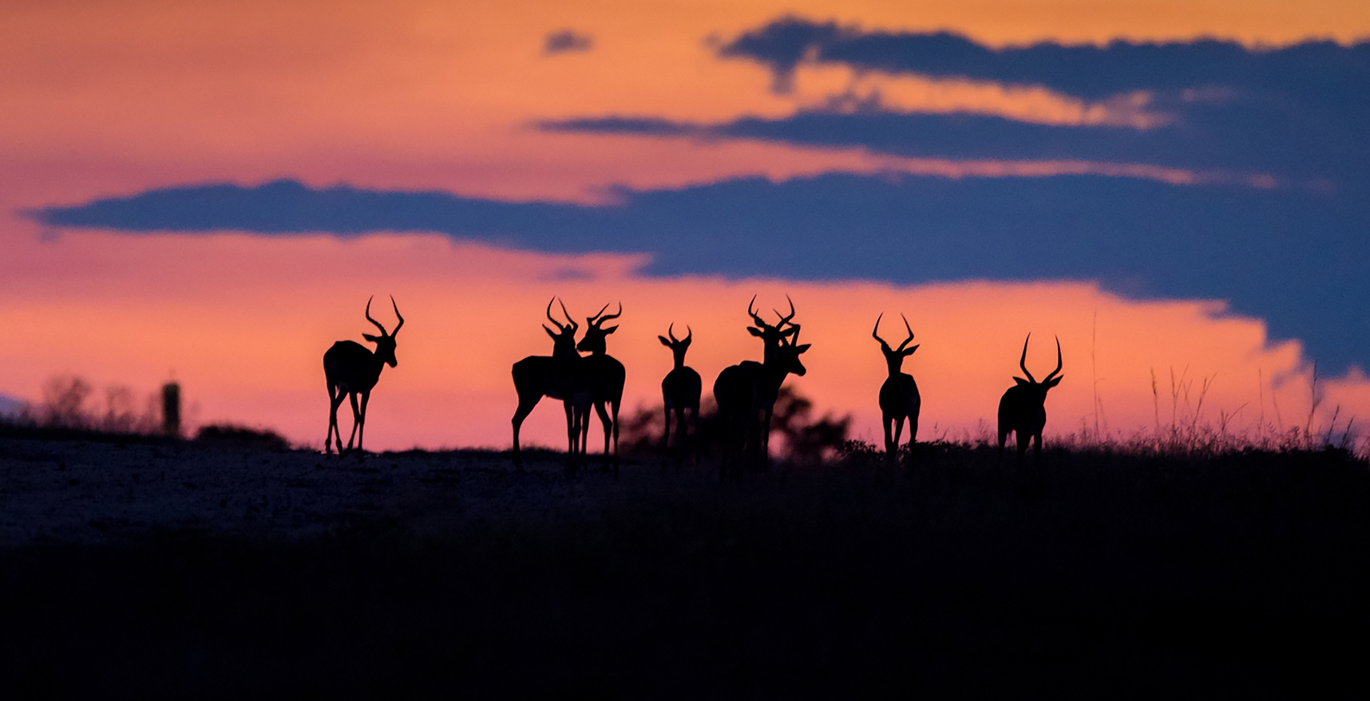 South-Africa-Wildlife-Impala-Silhouette