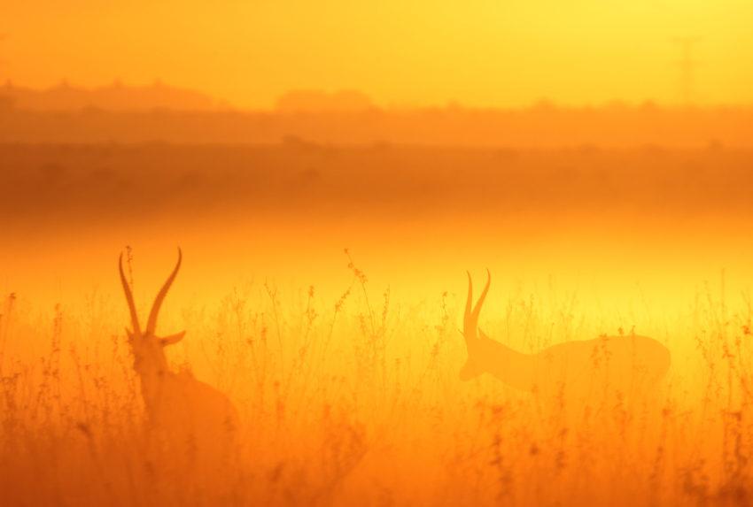 Kenya-Nairobi-Antelope-Sunset
