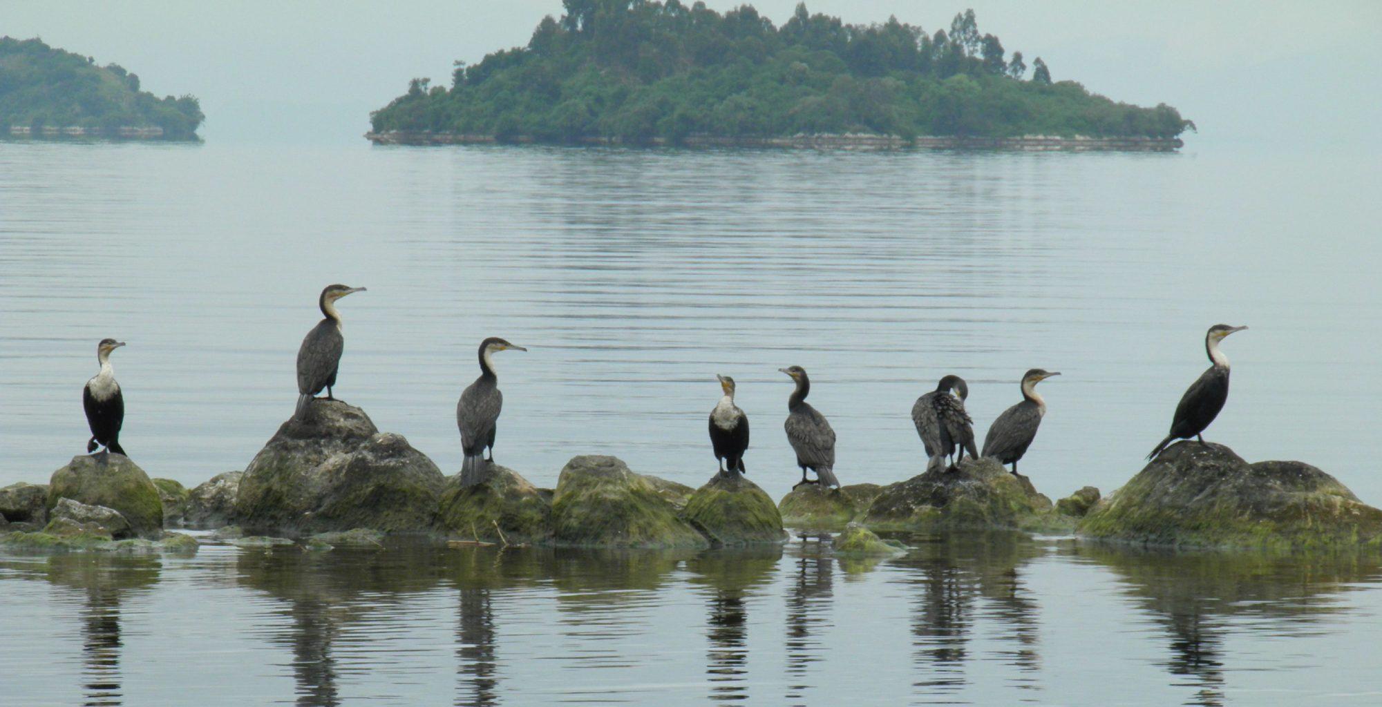 Lake Kivu Birds