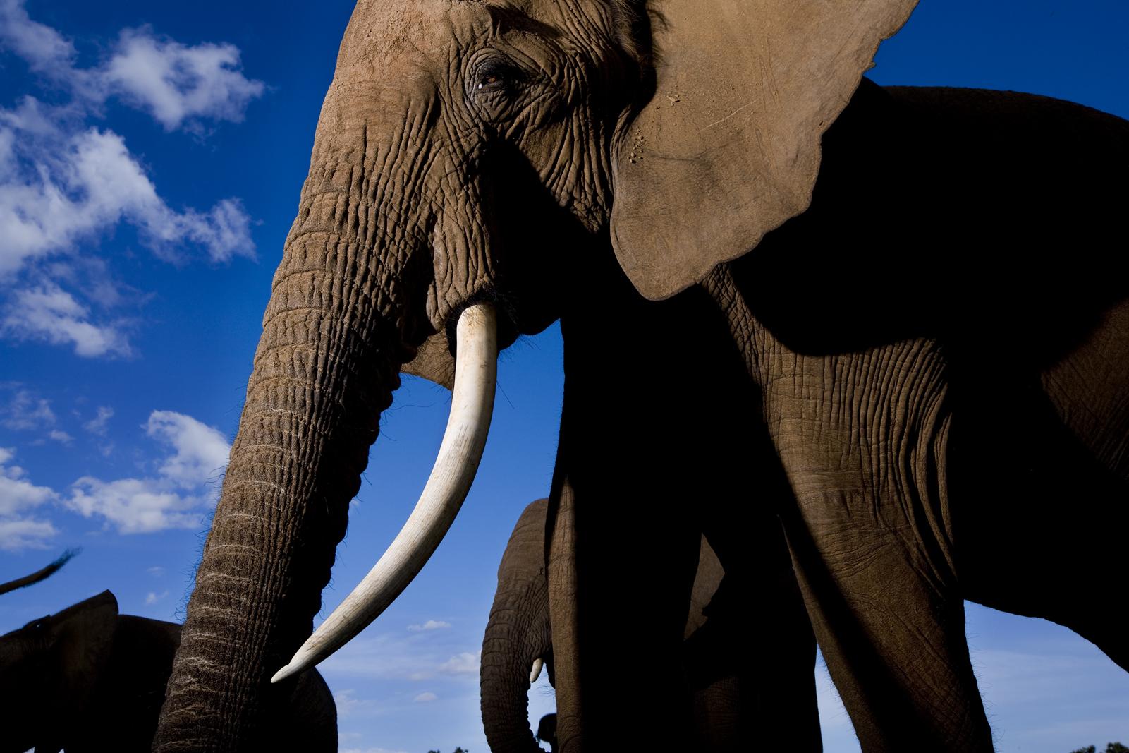 Elephant Watch Camp Kenya Elephant