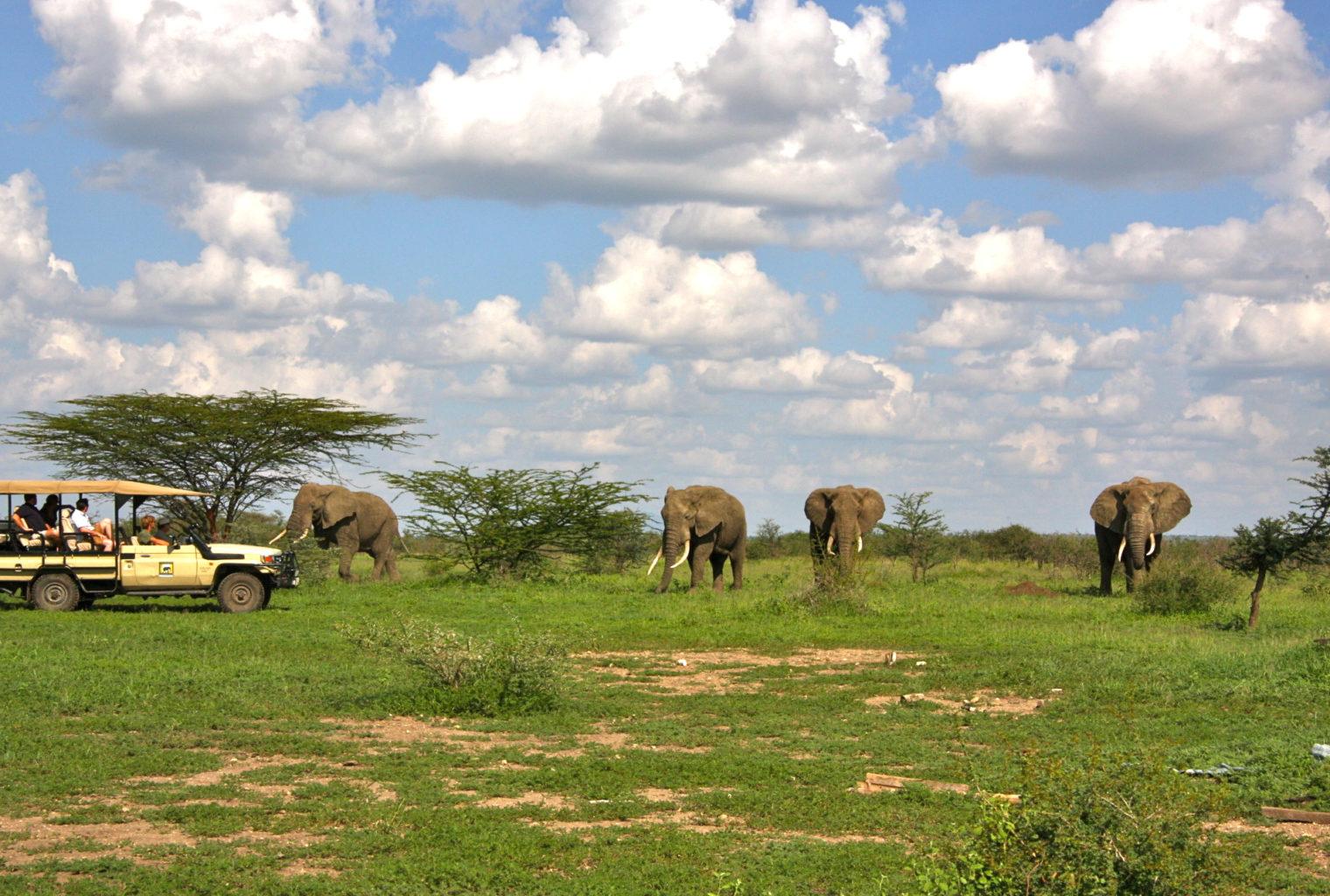 Manyara Ranch Tanzania Wildlife