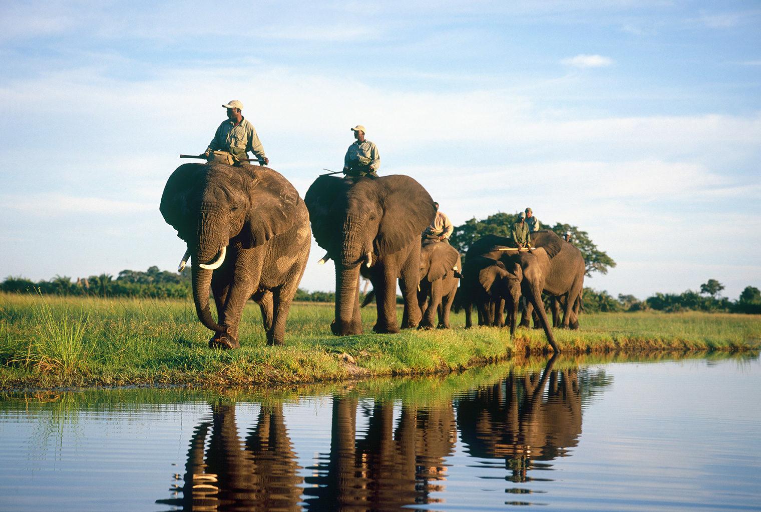 Abu-Elephant-Camp