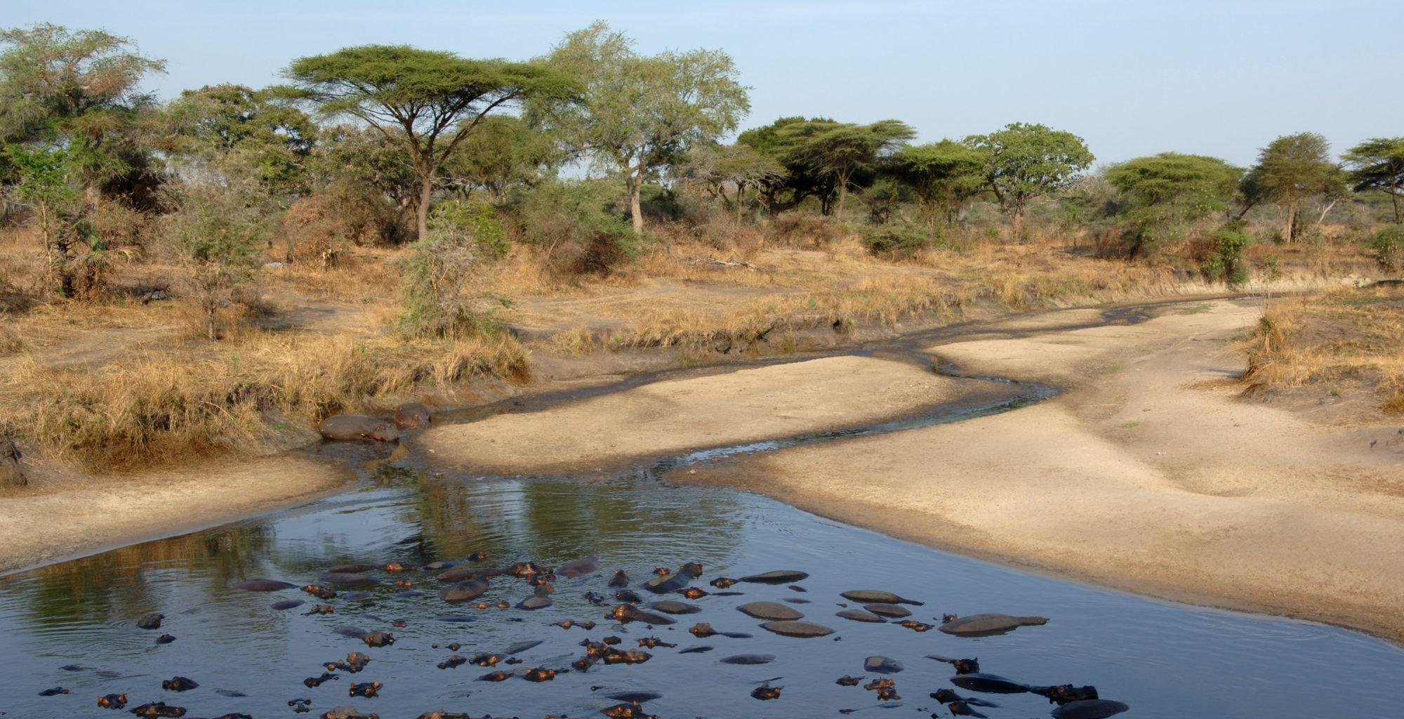 Chada-Katavi-Wildlife-Tanzania