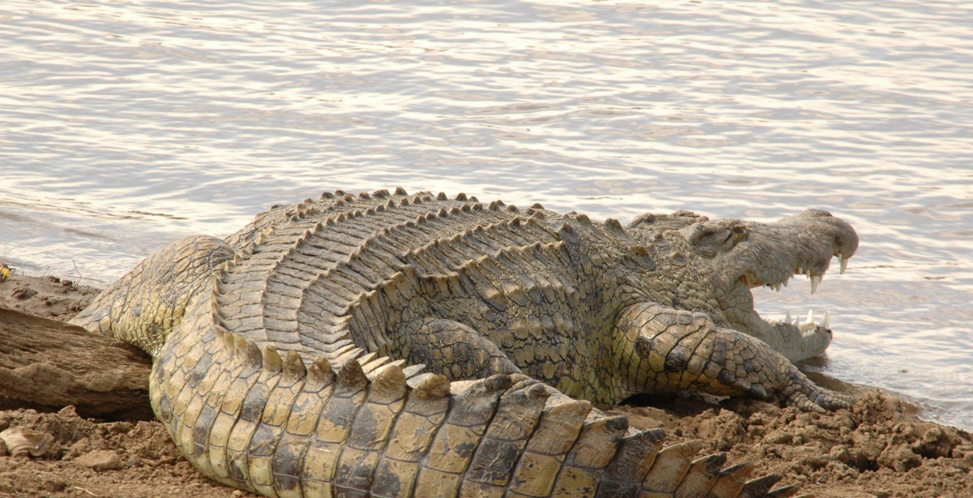 Tana Delta Camp Kenya Croc