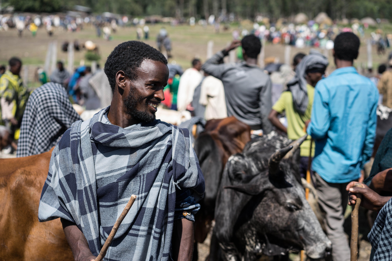 Bahir Dar Ethiopia Cattle Market