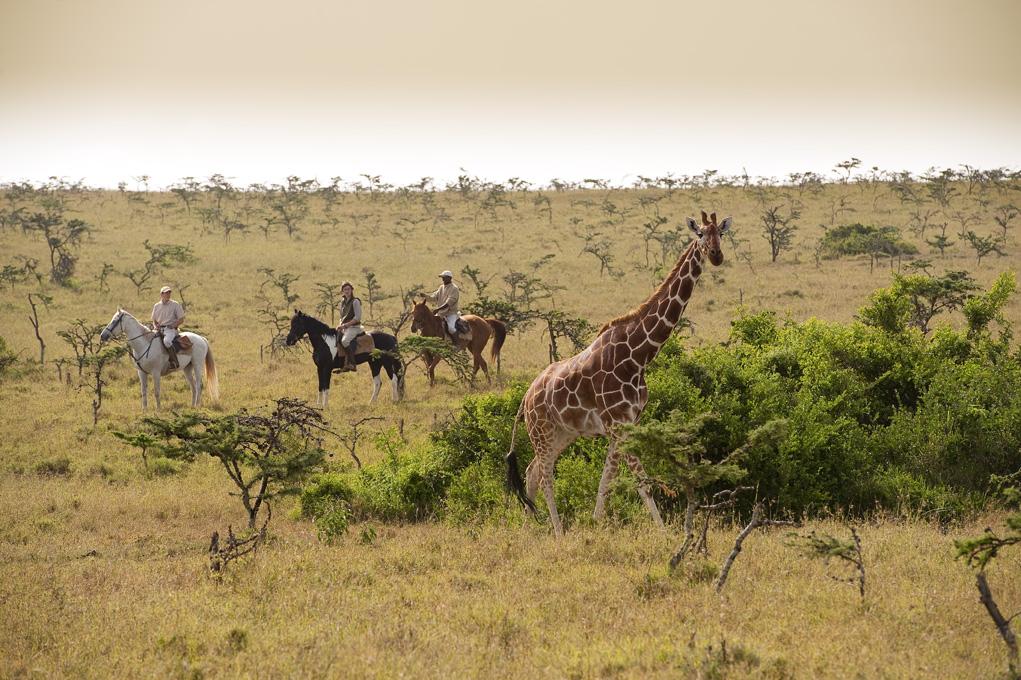 Sirai House Kenya Giraffe