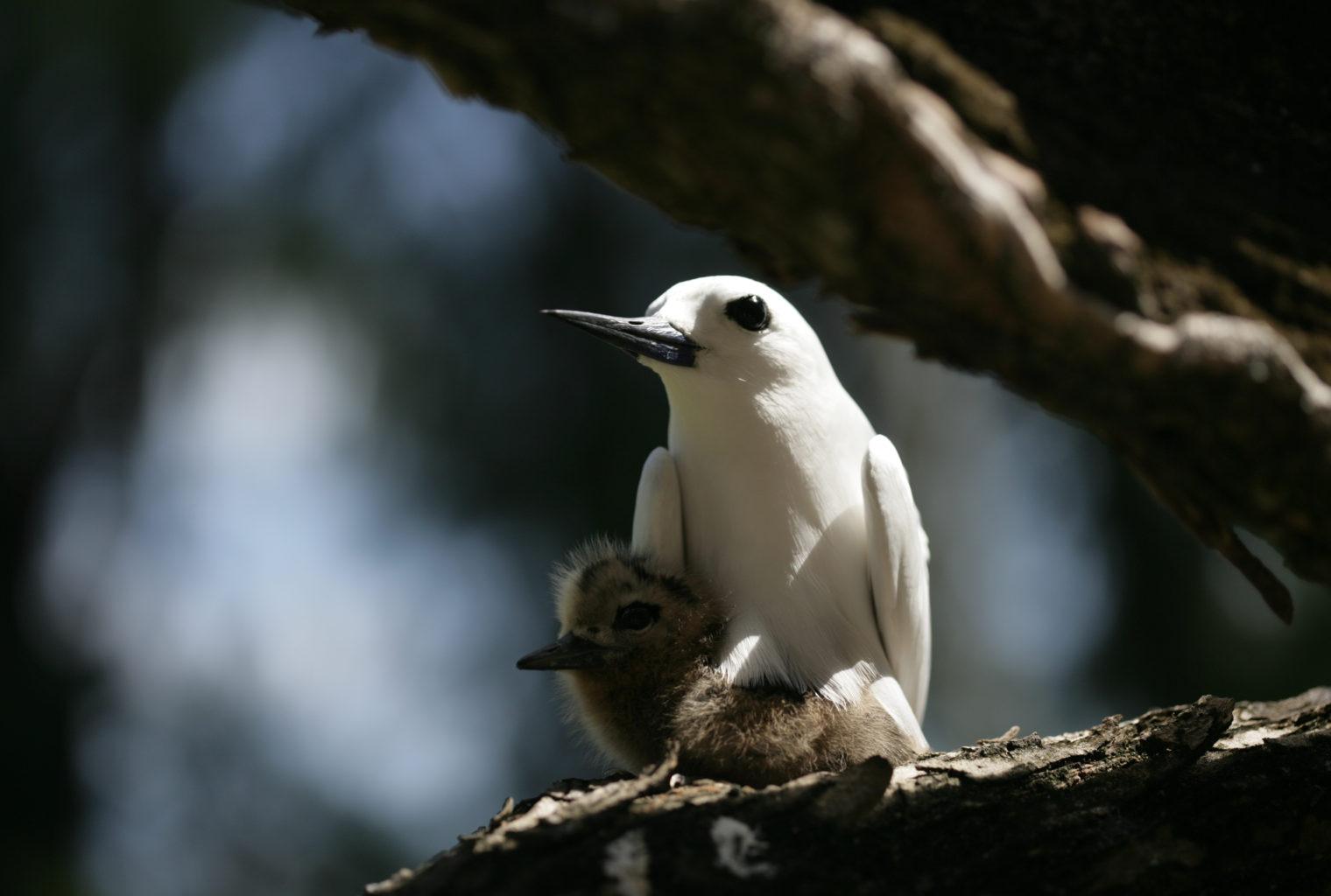 Denis Island Seychelles Wildlife