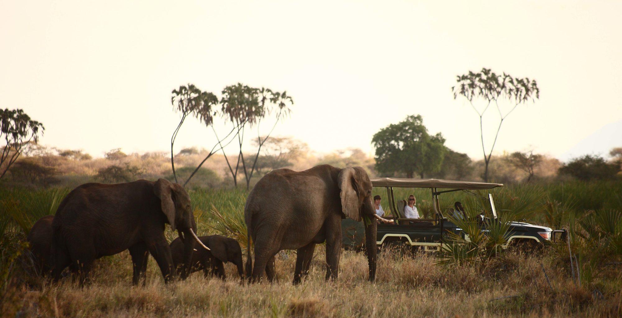 Kenya-Meru-National-Park-Wildlife-Elephant