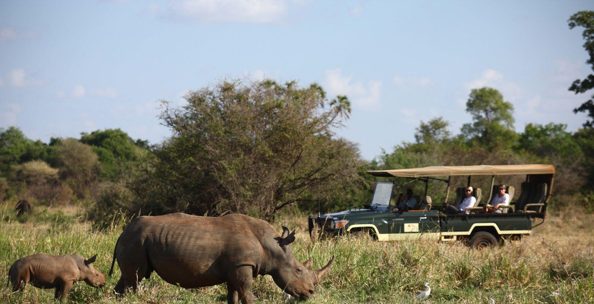 Elsa's Kopje Camp Kenya Game Drive