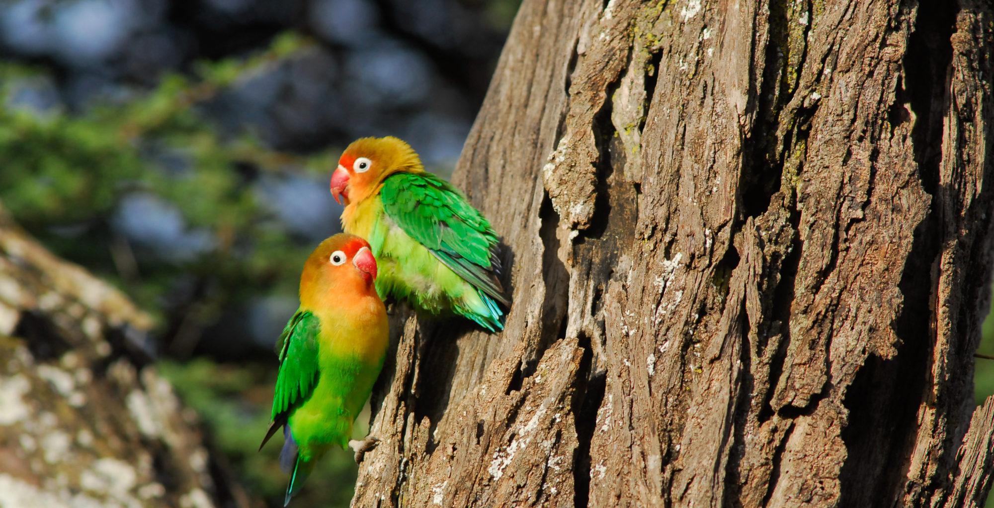 Dorobo Safaris Tanzania Bird