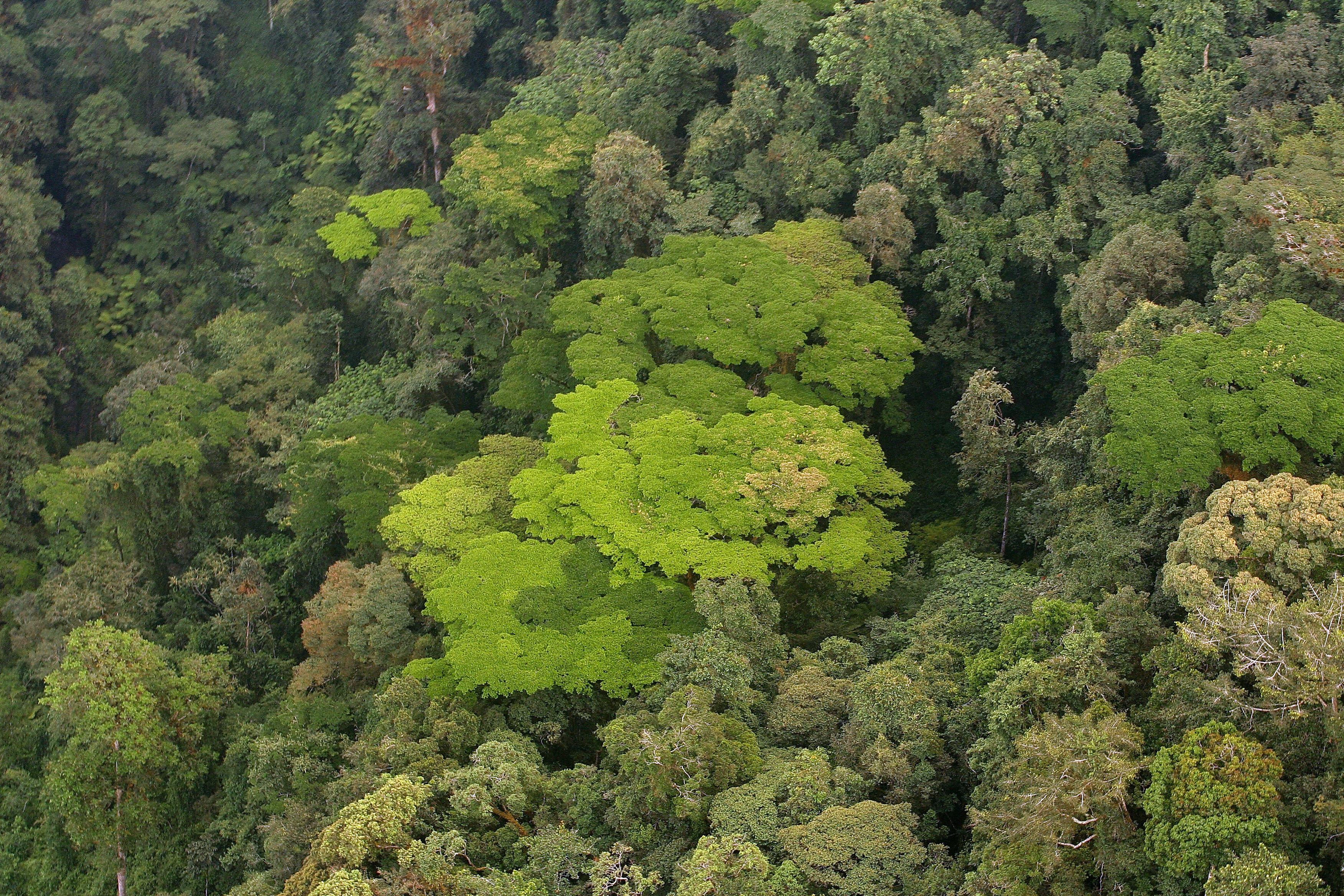 Nyungwe Forest Lodge Rwanda Aerial Forest
