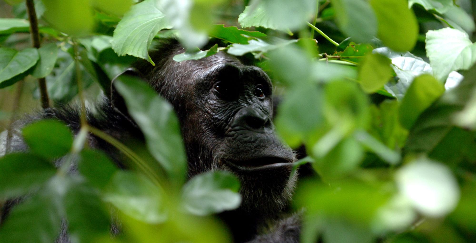 Greystoke Mahale Tanzania Exterior Dining Wildlife