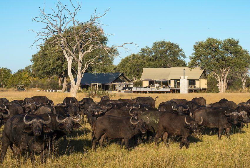 Zimbabwe-Hwange-Linkwasha-Exterior-Buffalo