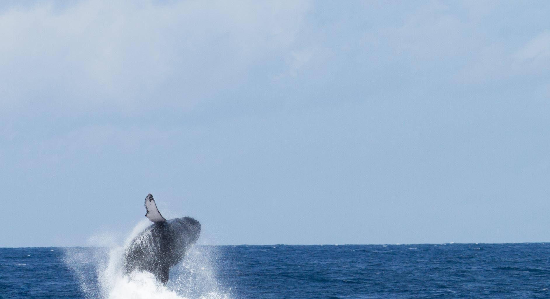 Hemingways-Watamu-Whale