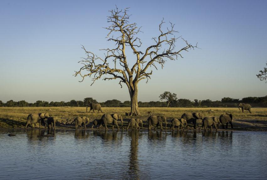 Zimbabwe-Hwange-Elephants