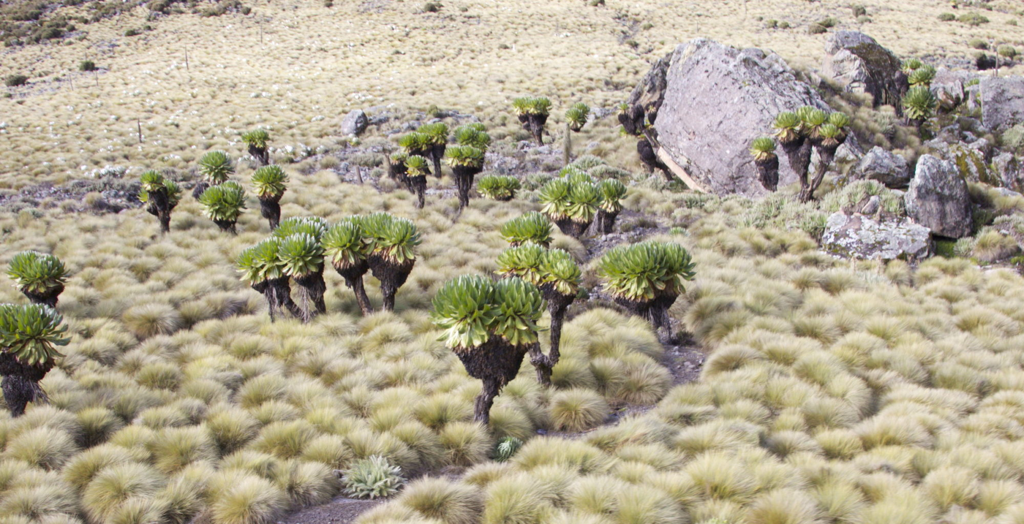 Ethiopia-Bale-Mountains