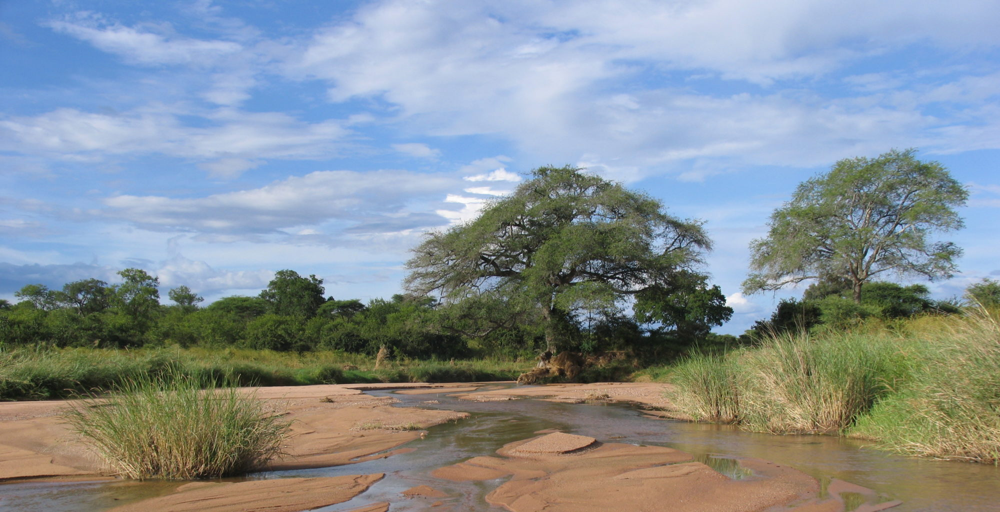 Tanzania-Ruaha-National-Park-Riverbed