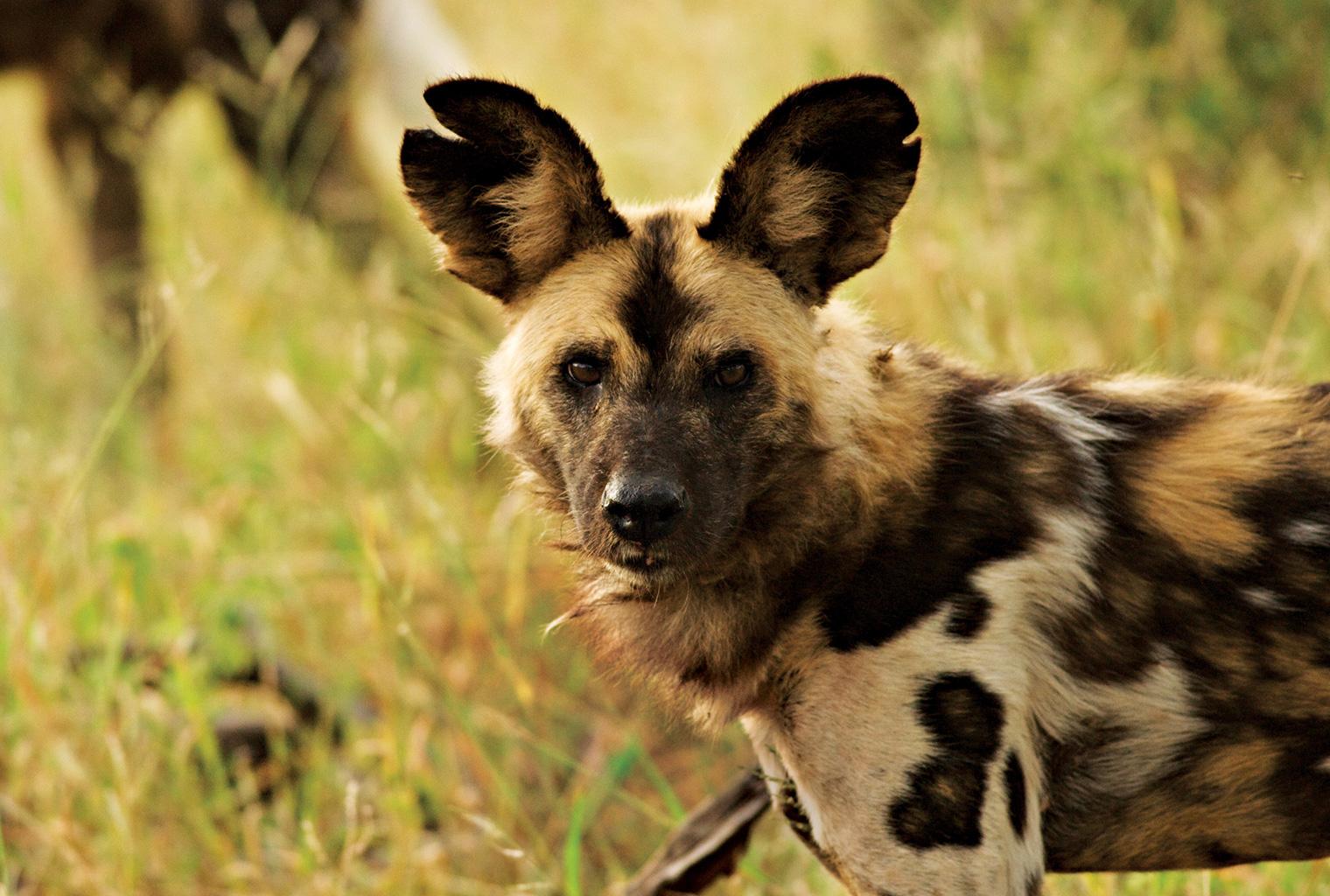 Impodimo-Lodge-South-Africa-Wildlife
