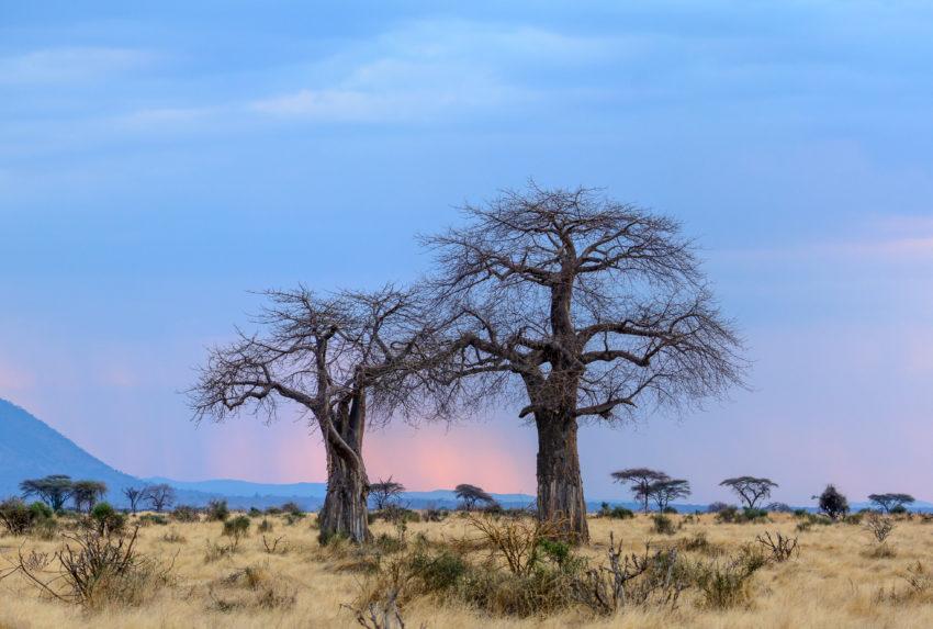 Ruaha National Park. Tanzania