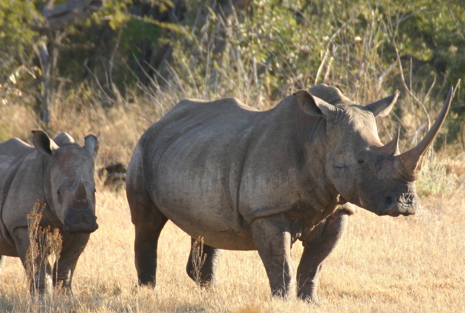 Jamala-Madikwe-South-Africa-Wildlife