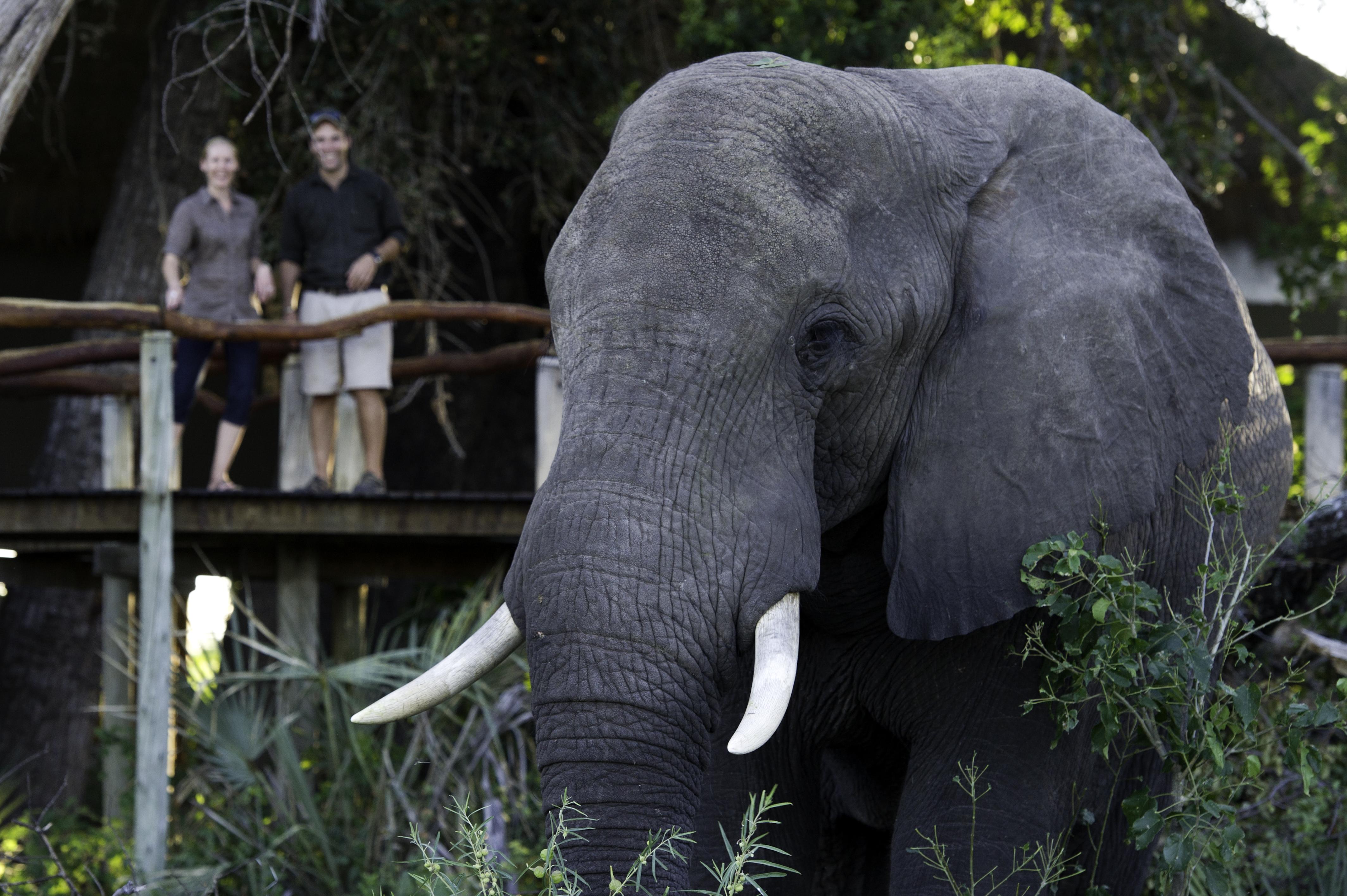 Jao-Camp-Botswana-Elephant