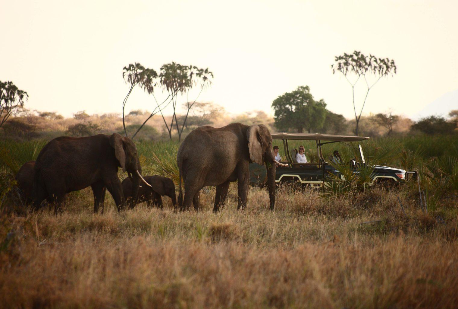 Joy's Camp - Game Drive - Elephants