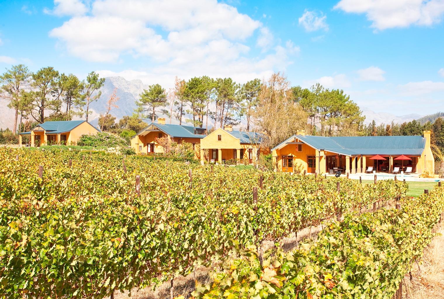 La Residence, South Africa, Vineyard