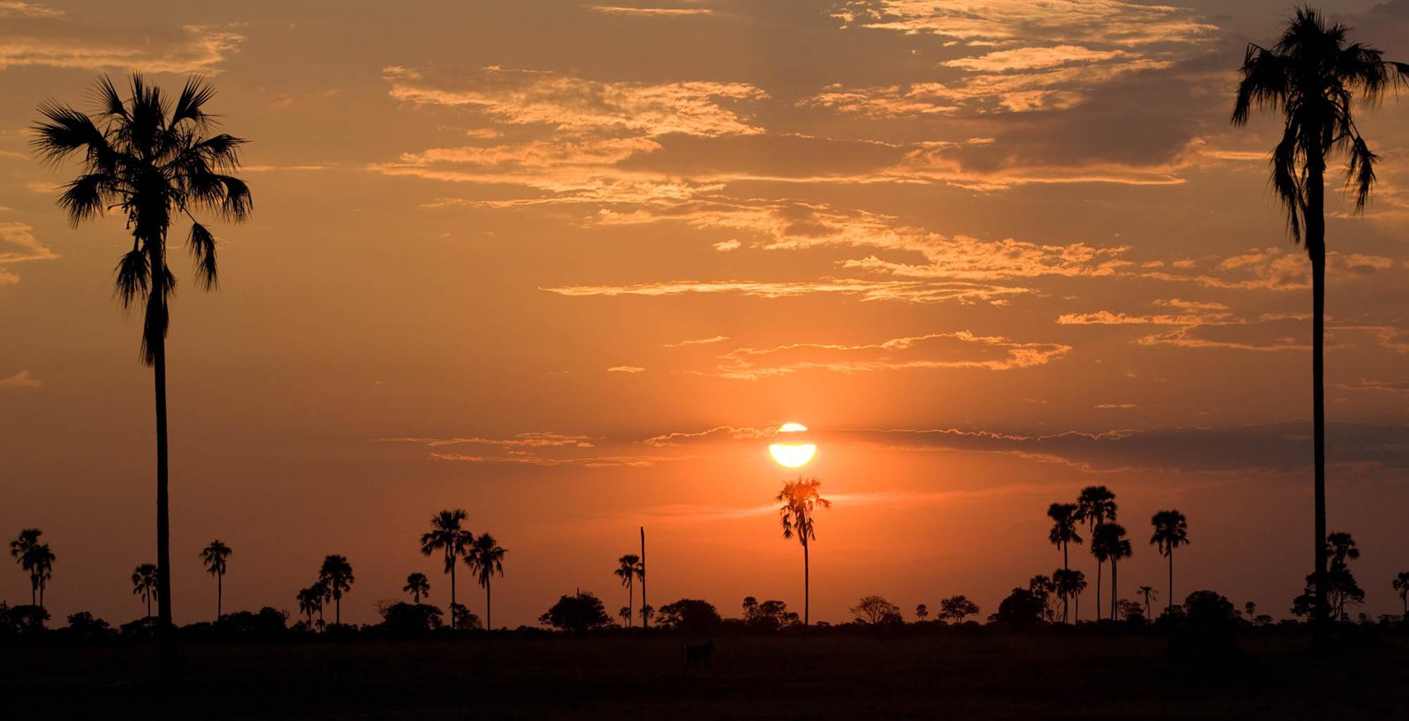 Zimbabwe-Hwange-Sunset