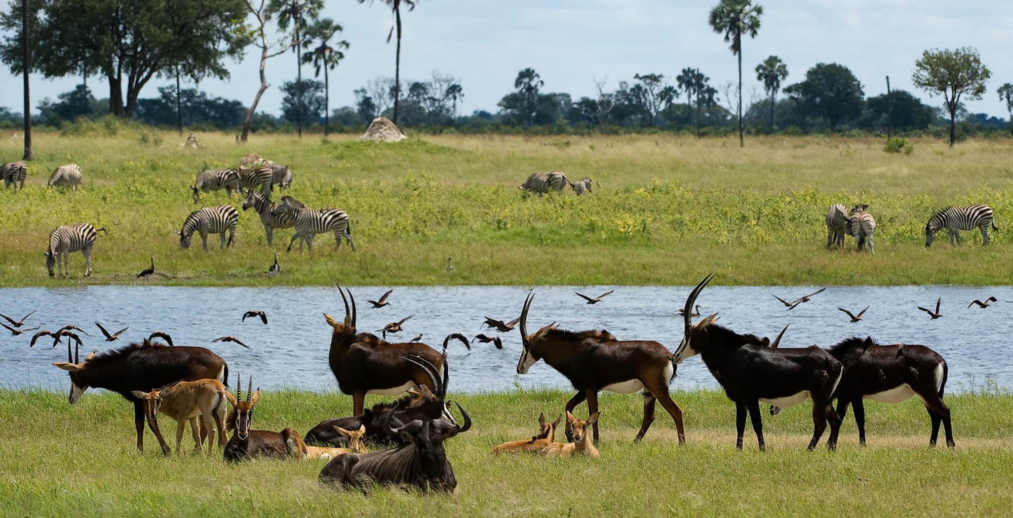 Zimbabwe-Hwange-Wildlife