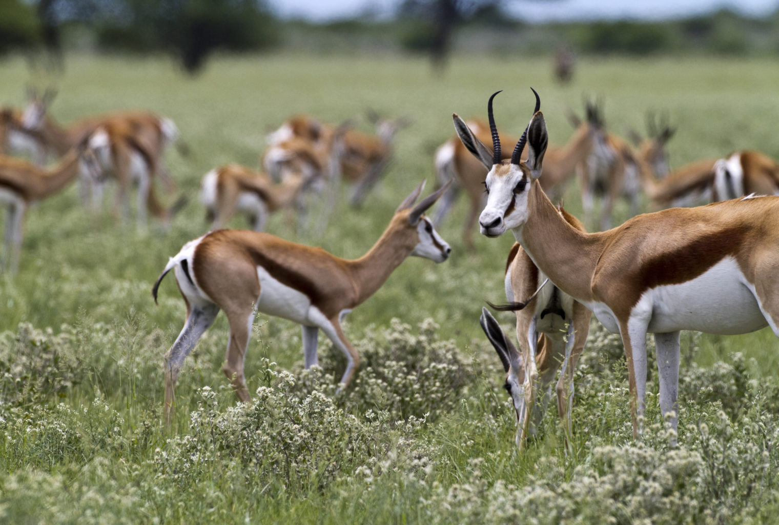Kalahari Plains Camp Wildlife
