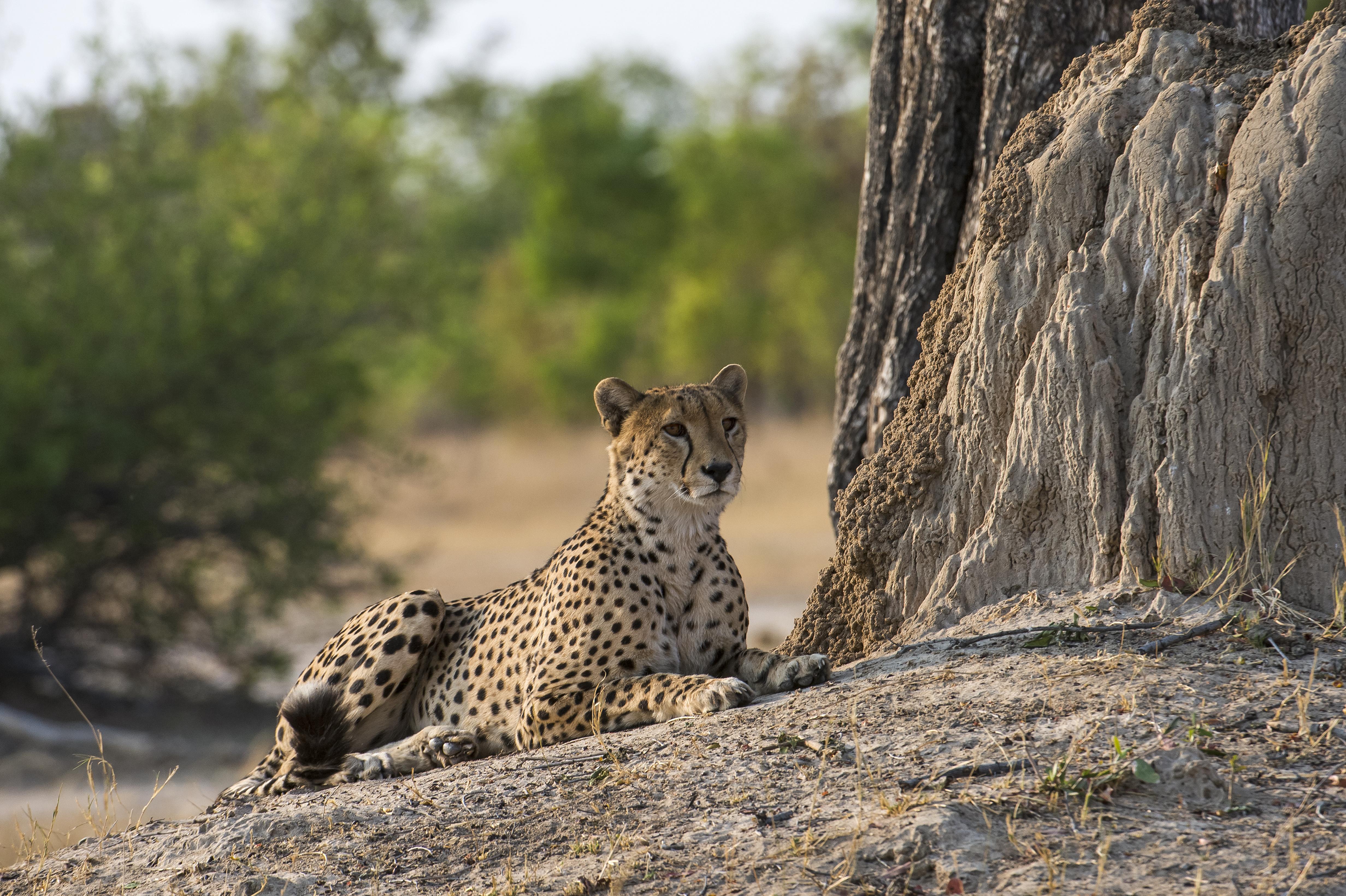 Linkwasha-Zimbabwe-Wildlife