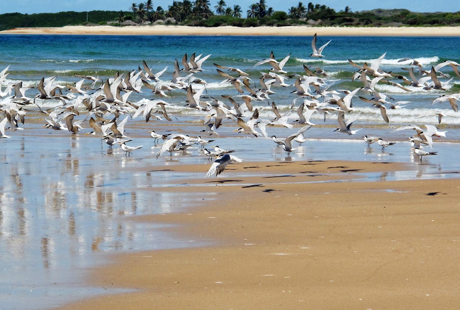Mainland-Coast-Kenya-Birds-Beach
