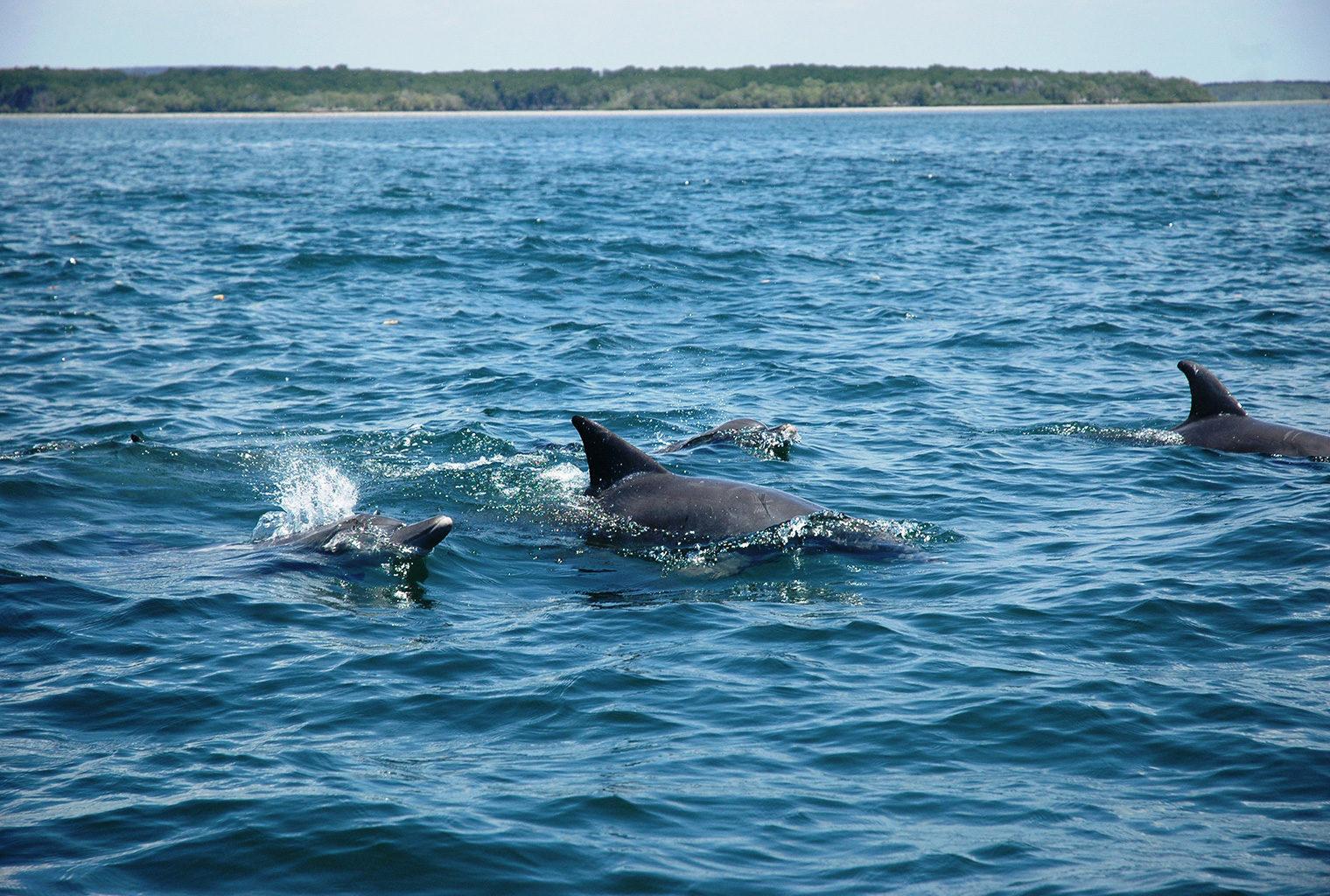 Mainland-Coast-Kenya-Dolphins