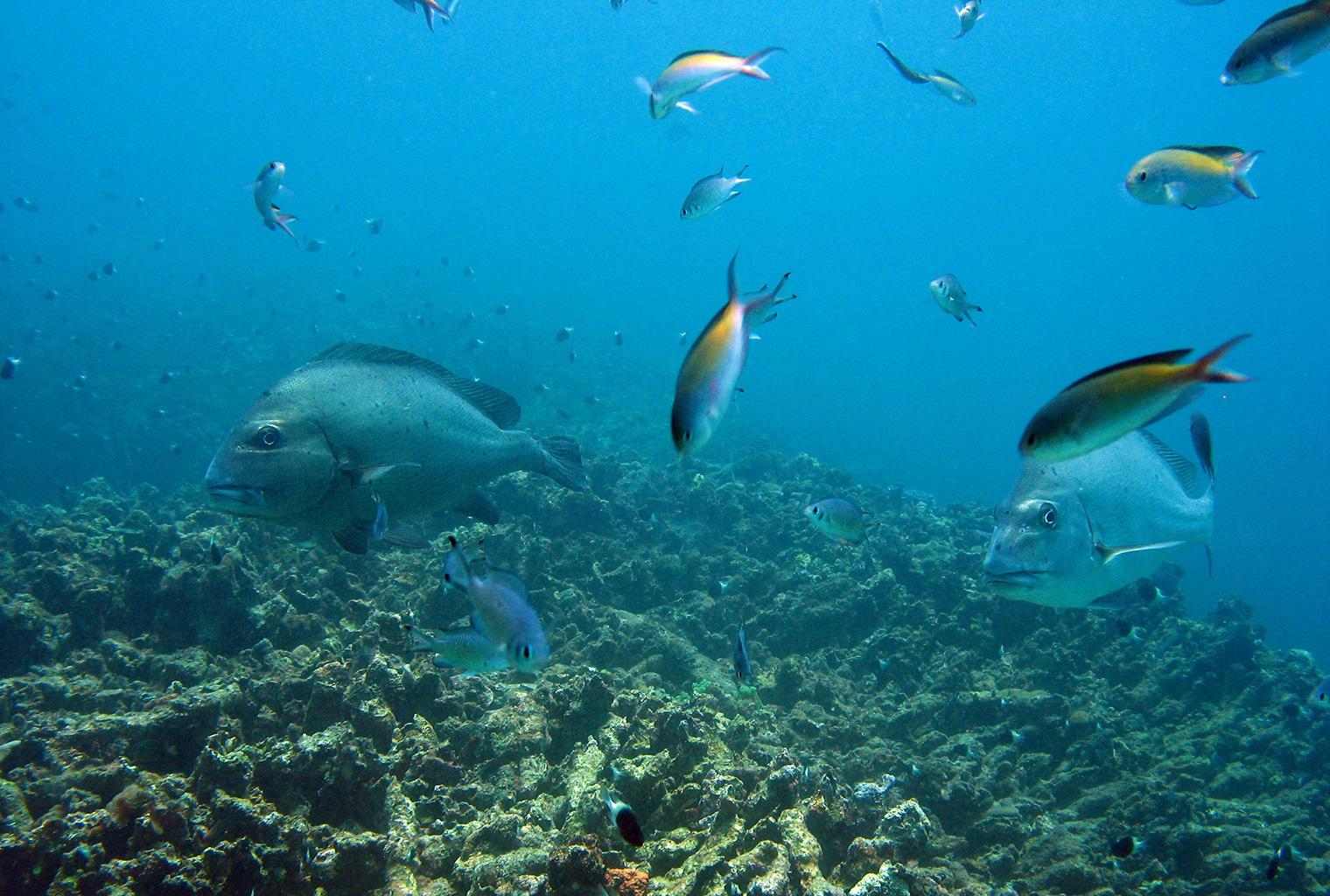 Mainland-Coast-Kenya-Fish
