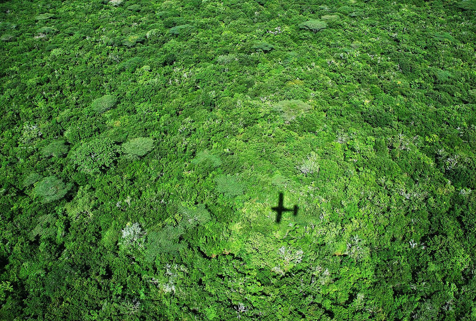 Mainland-Coast-Kenya-Forest