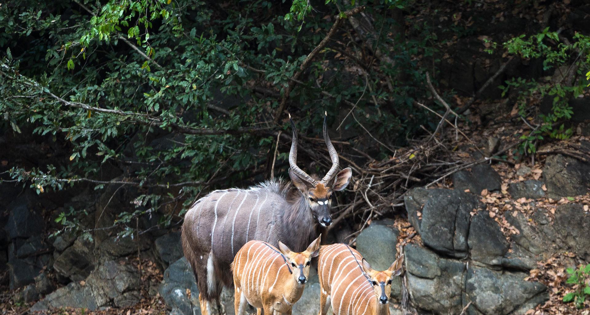 Malawi-Majete-Wildlife-Reserve-Wildlife