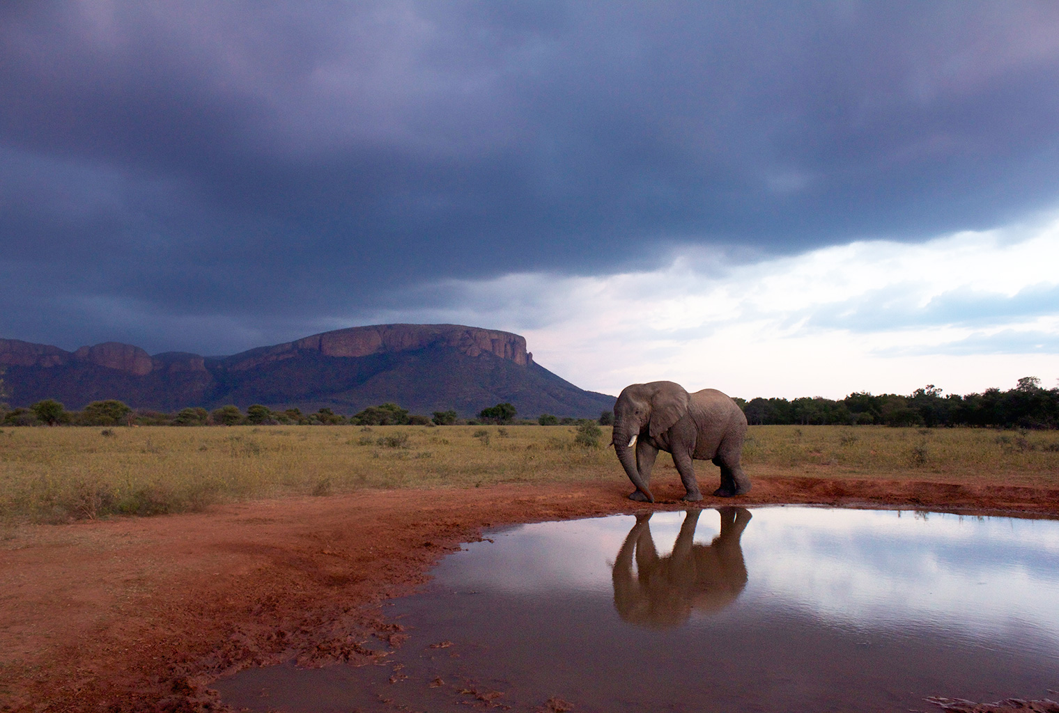 Marataba-Safari-Lodge-South-Africa-Elephant