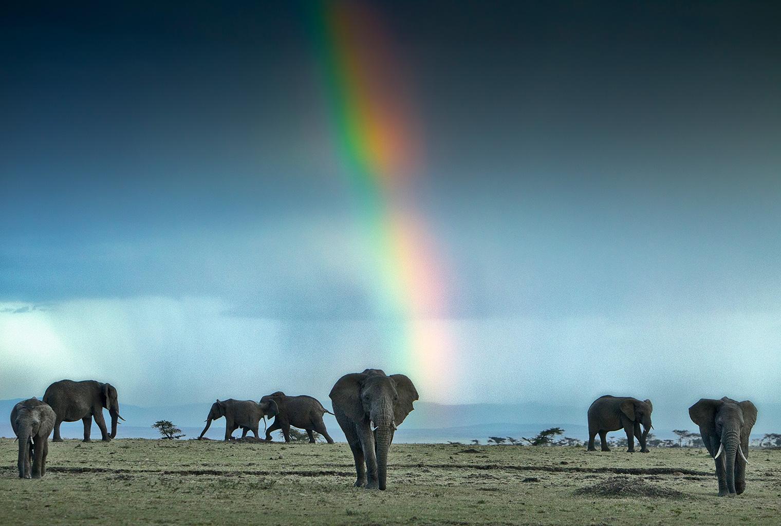 Masaai-Mara-Area-ElephantsMasaai-Mara-Area-Elephants